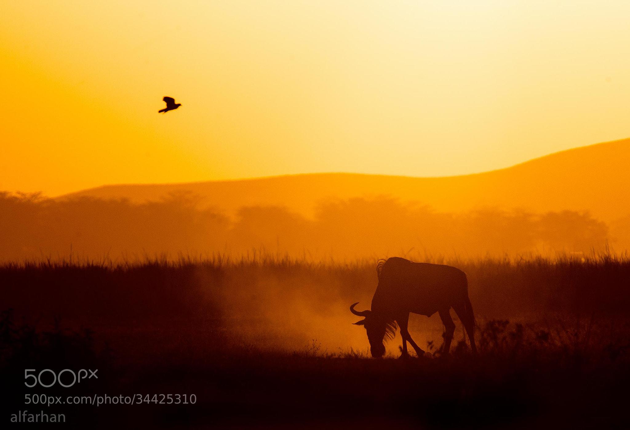 Photograph sundown  by ibrahim  alfarhan on 500px