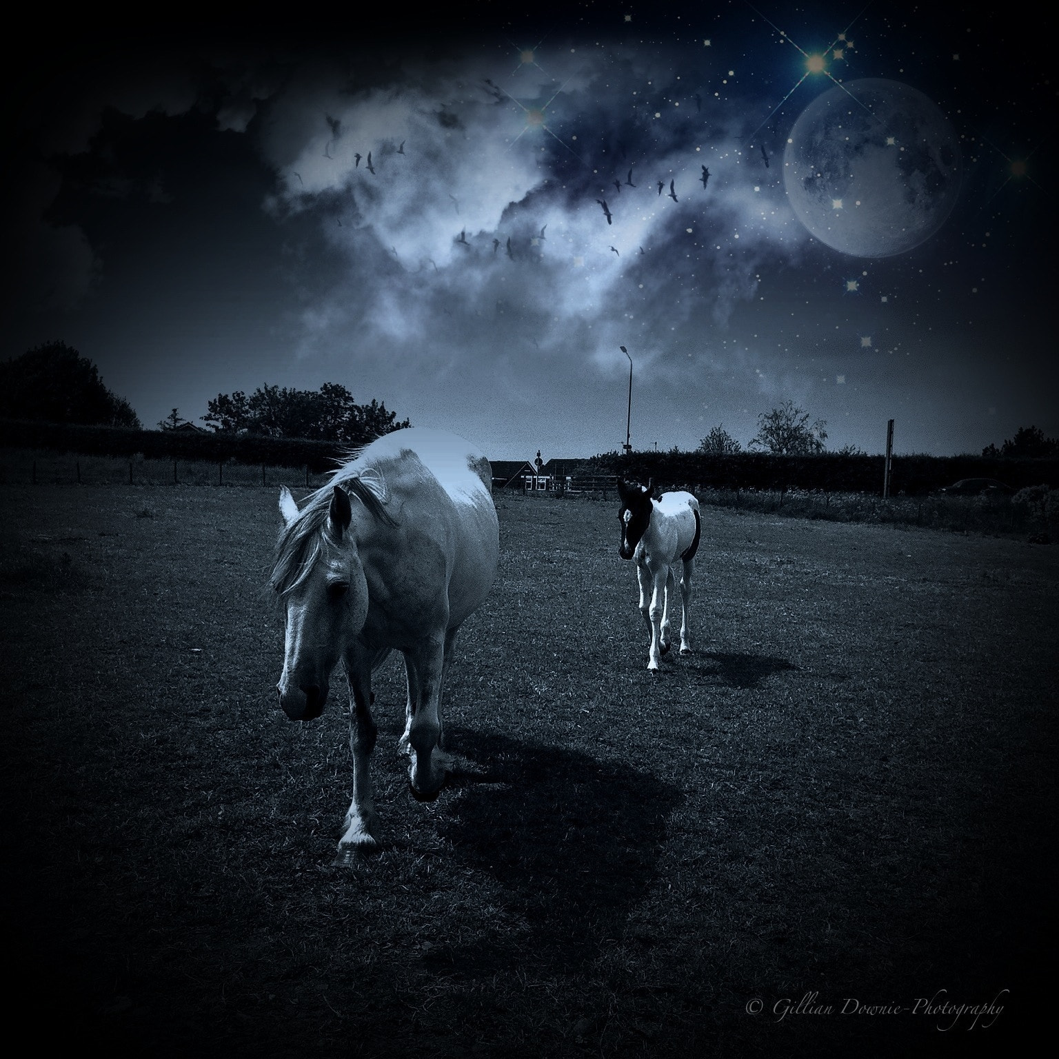Photograph Moonlit Walk by Gillian Downie-Photography on 500px