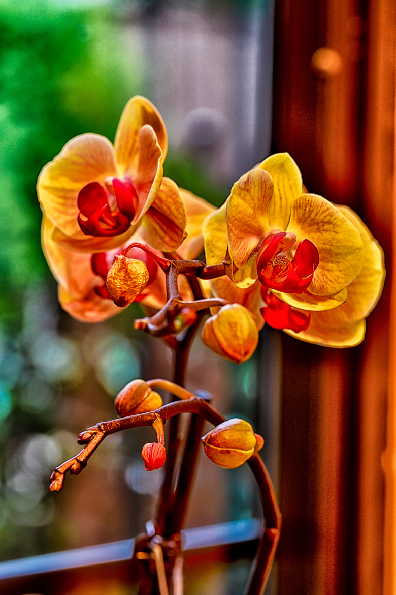 Photograph Orchid - Yellow by Nerces Mavelian on 500px