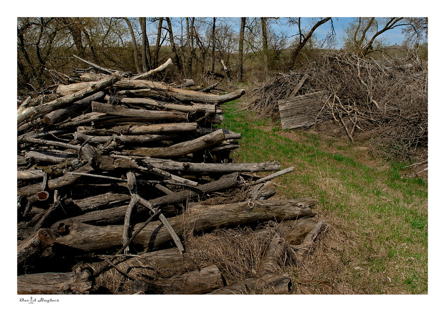 Farm Brush Pile