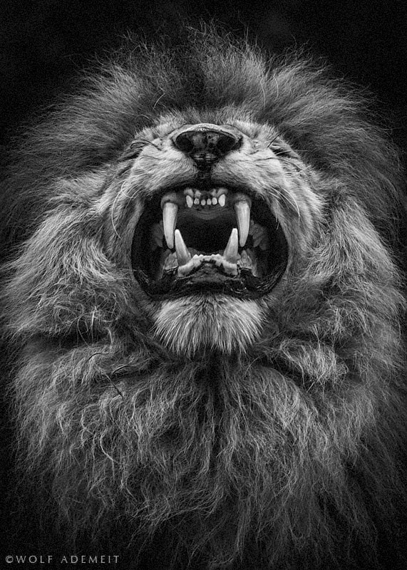 Photograph LION TEETH by Wolf Ademeit on 500px
