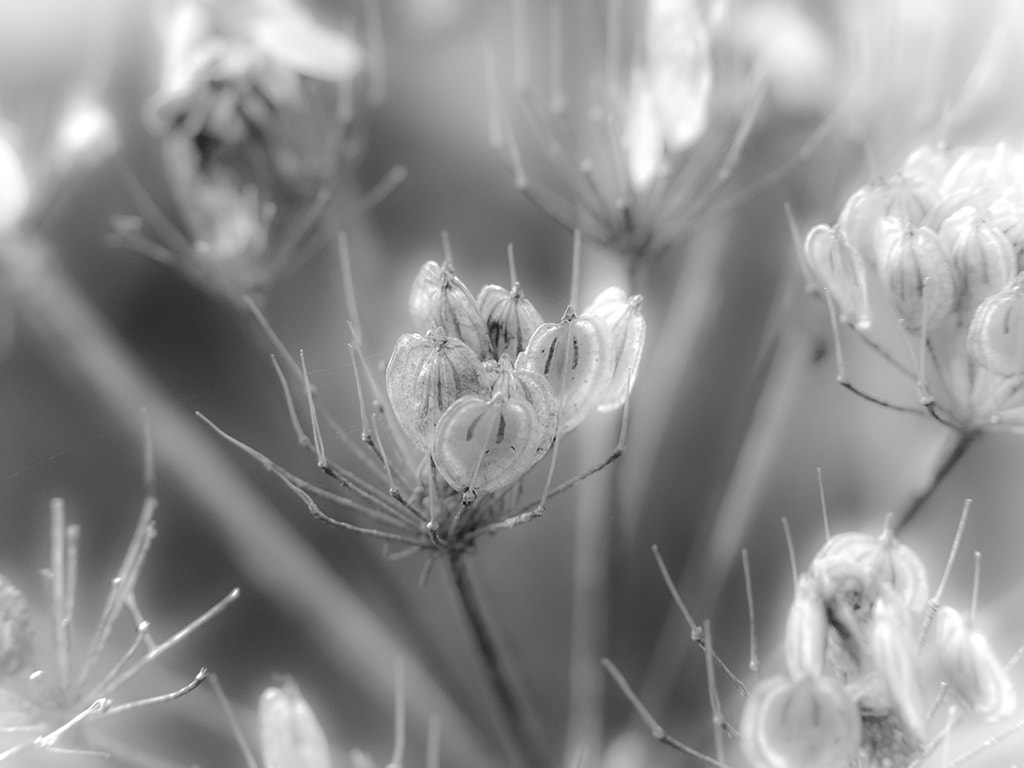 Photograph Gaussian Petals by Dale Hill on 500px