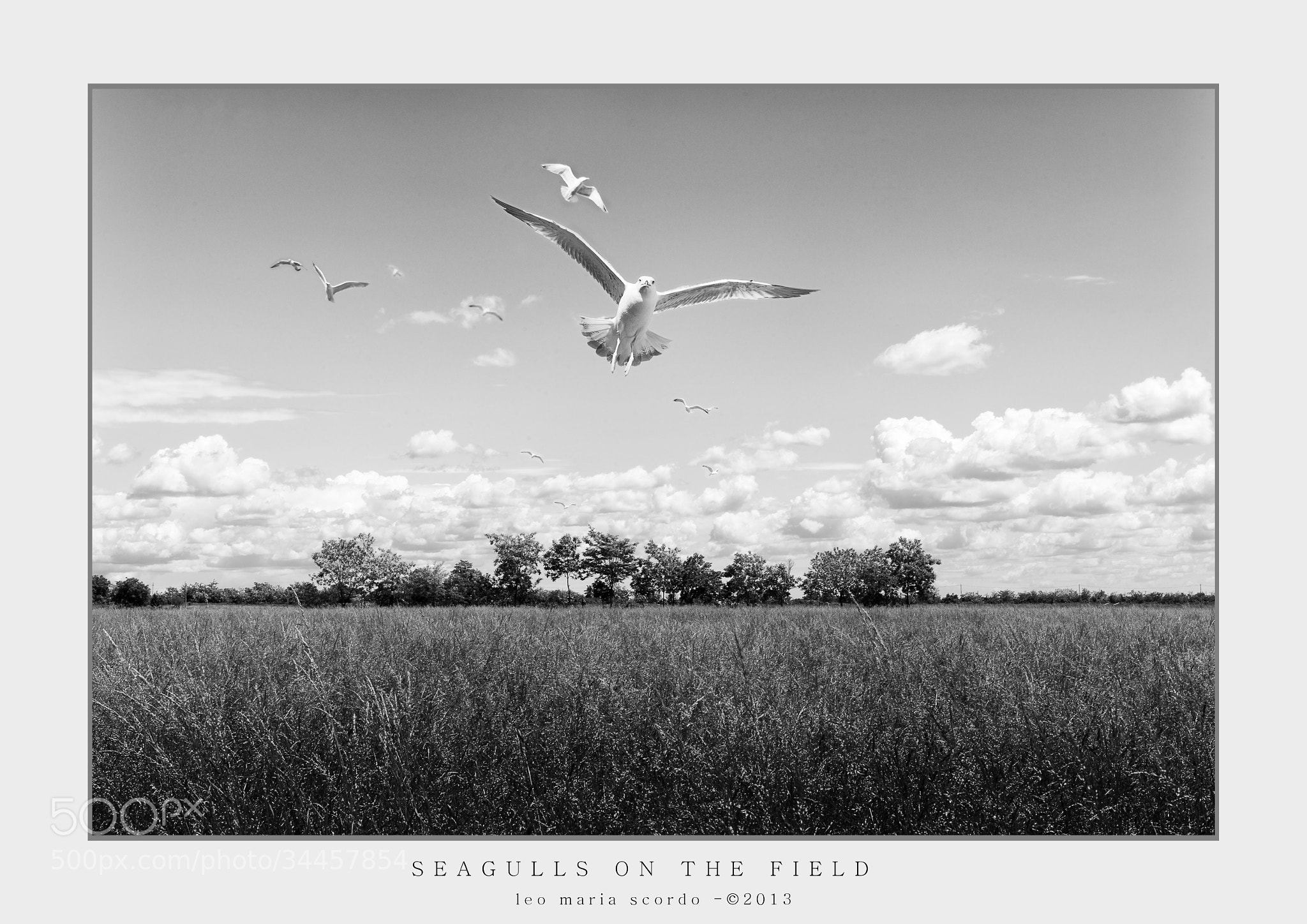 Photograph SEAGULLS ON THE FIELD by Leo Maria Scordo on 500px