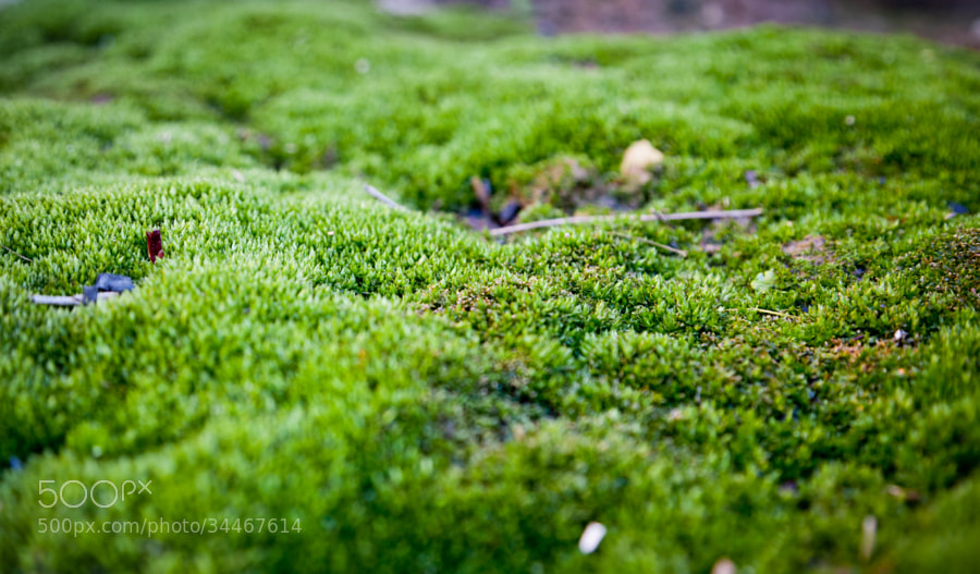 Just moss by Vladimir S. (wind_up_bird)) on 500px.com