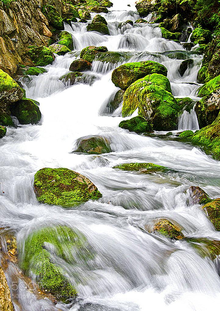 Photograph kokra by boštjan košir on 500px