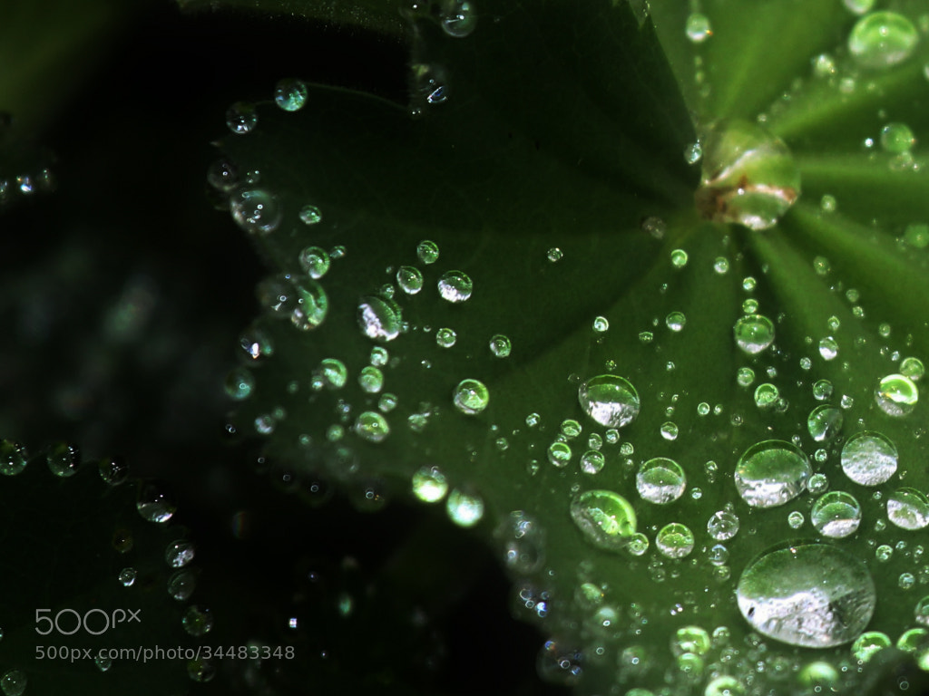 Photograph After The Rain by Delphine Devos on 500px