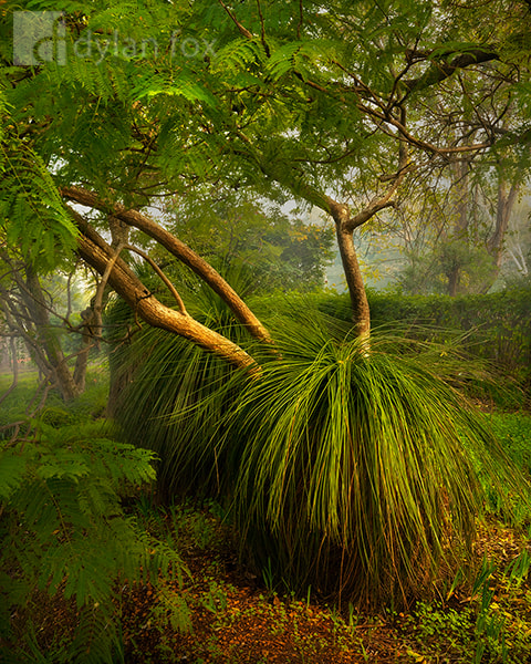Photograph Morning's Embrace by Dylan Fox on 500px