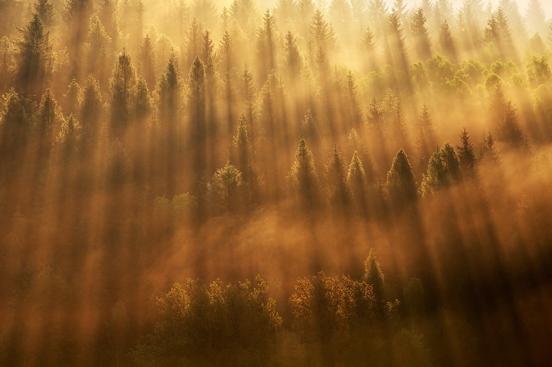 Photograph Burning Trees by Martin Rak on 500px