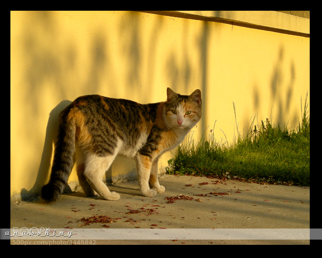 Photograph ☼ ✧ autumn and he ✧ ☼ by Ana Mitić on 500px