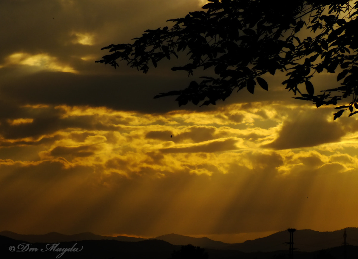 Photograph Golden sunset by mada dm on 500px