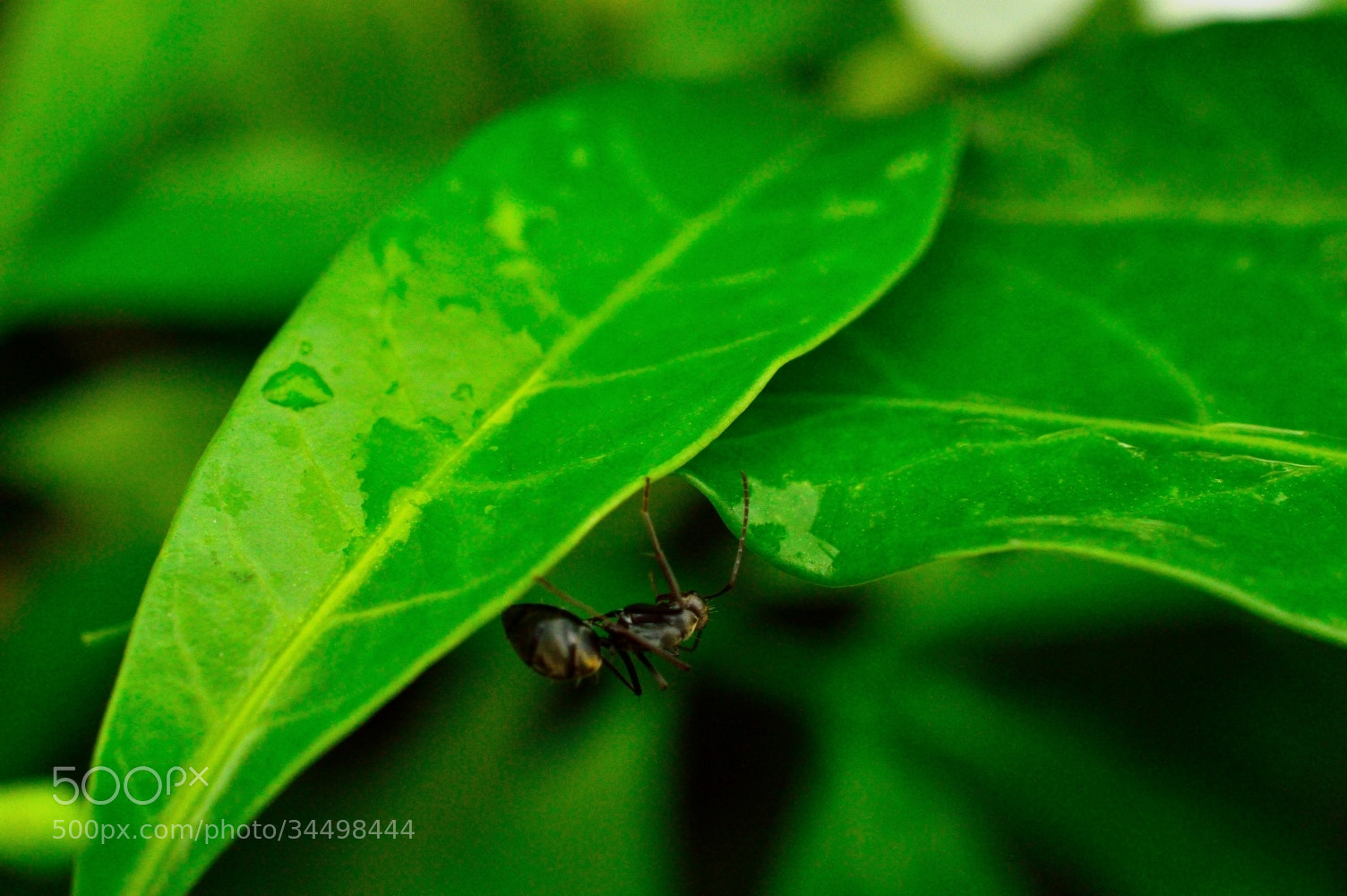 Photograph From one leaf to another by Zayan  on 500px