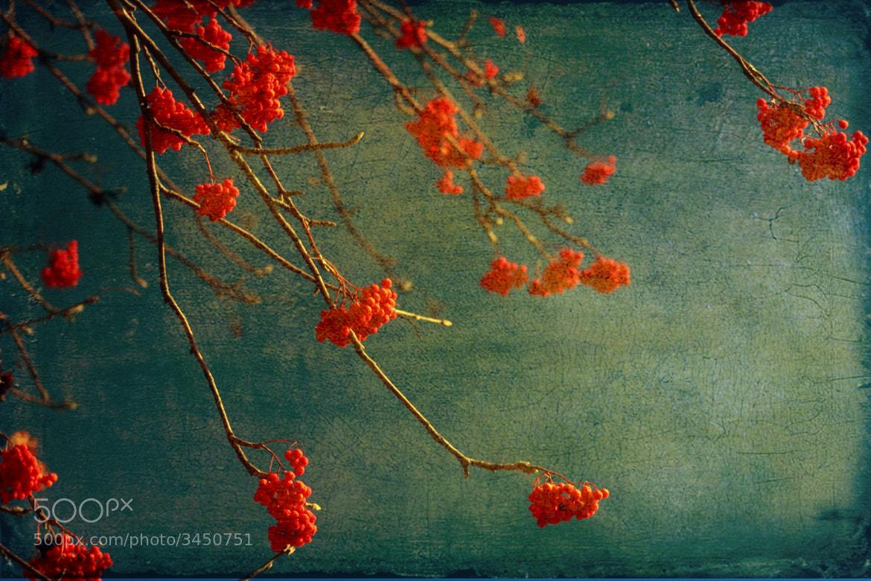 Photograph Berry nice by Angela King-Jones on 500px
