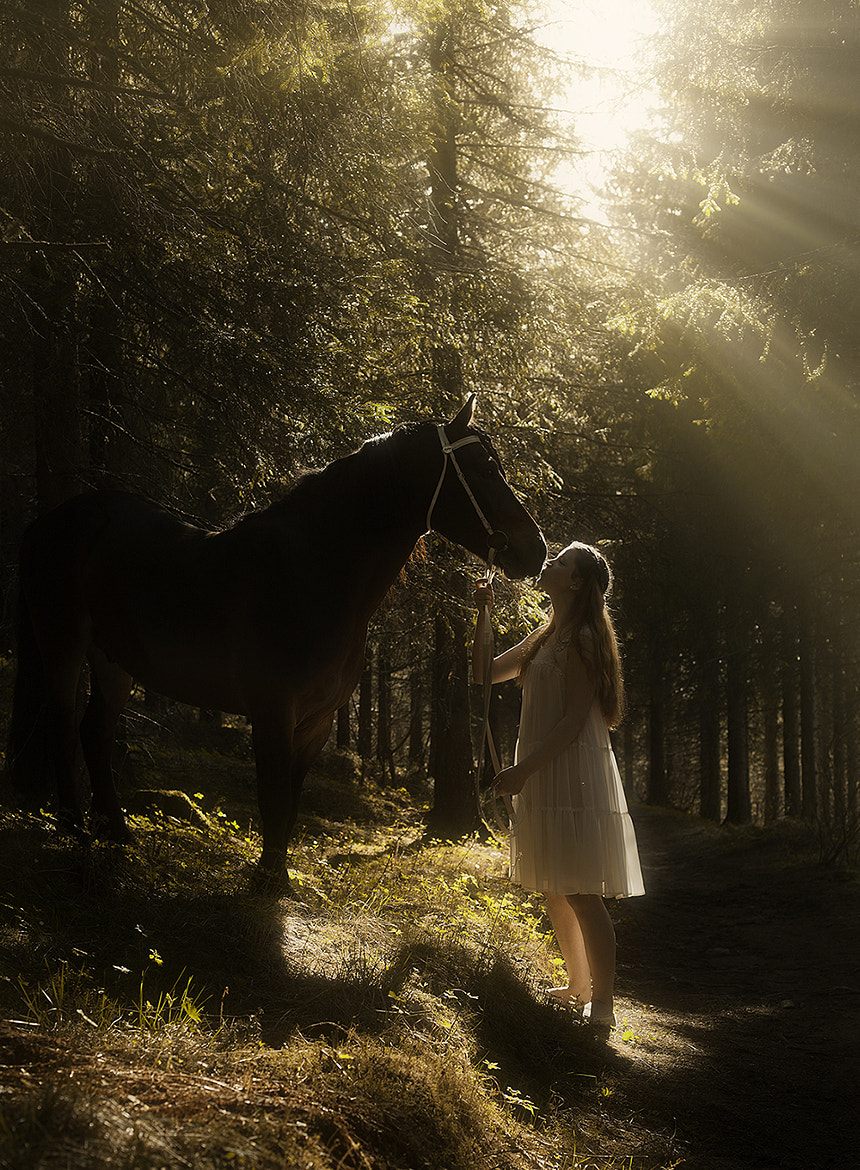 Photograph The love for Horses by Tommy  Angelsen on 500px