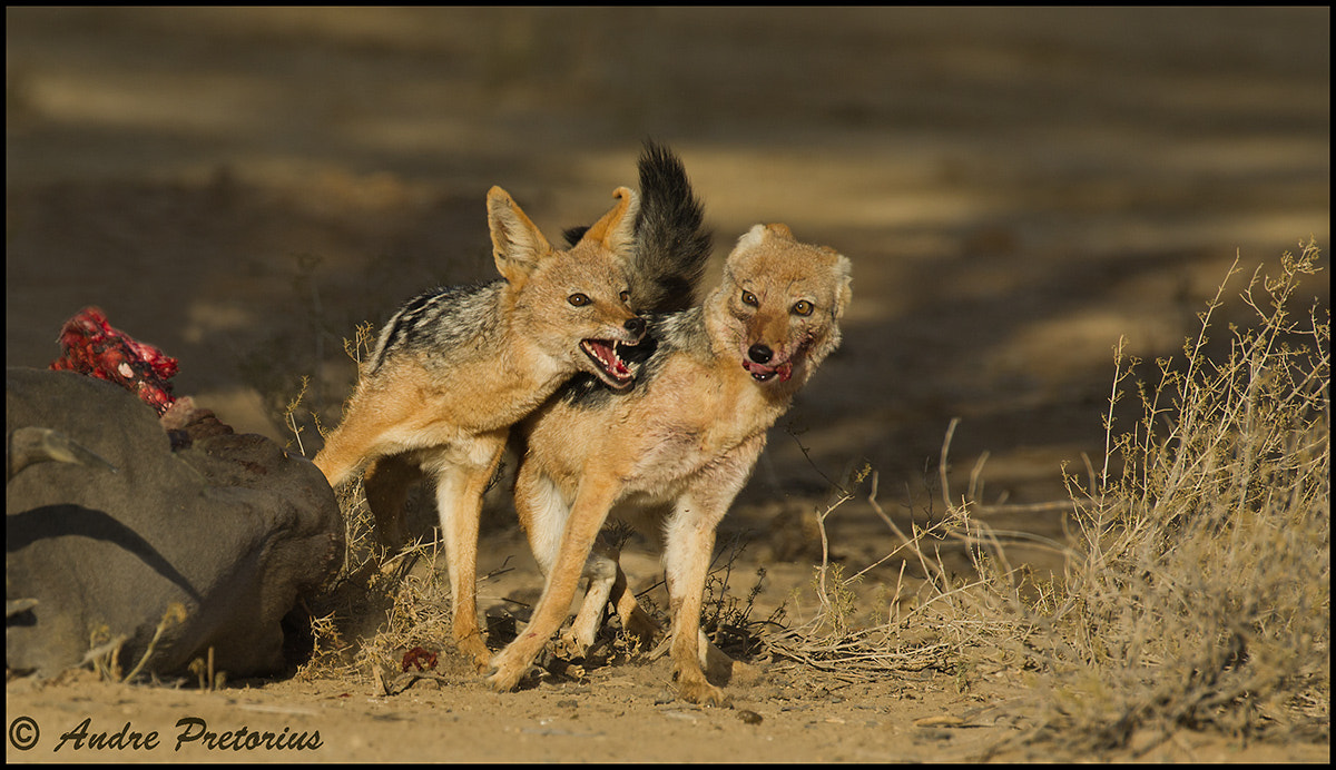 Photograph Fighting Thieves by Andre Pretorius on 500px