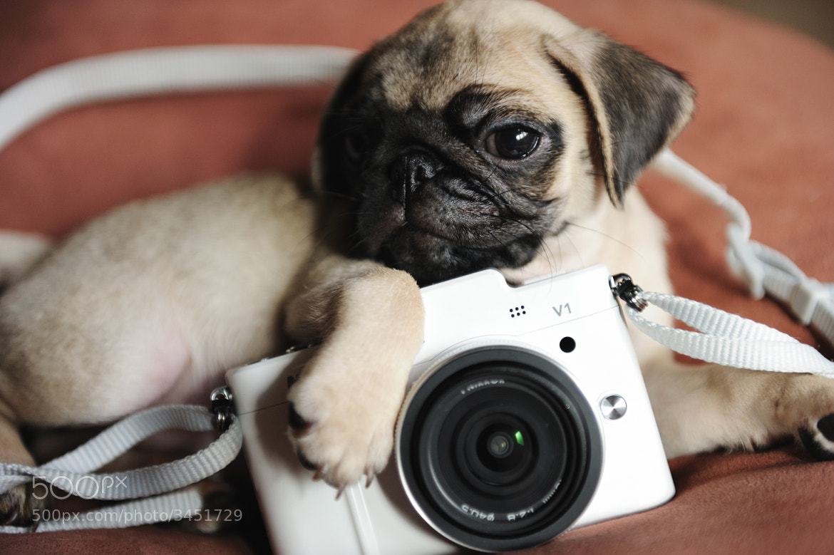 Photograph Yo, Need a dog photographer ? by Lu Donfer on 500px