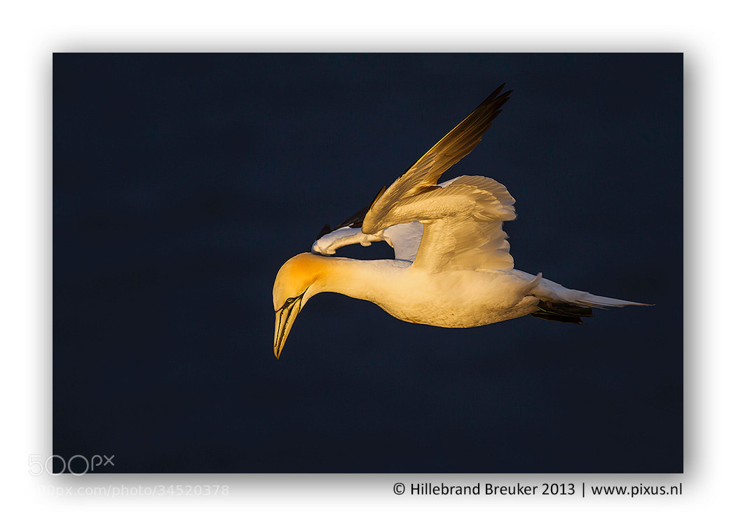 Photograph Ready to dive! by Hillebrand Breuker on 500px