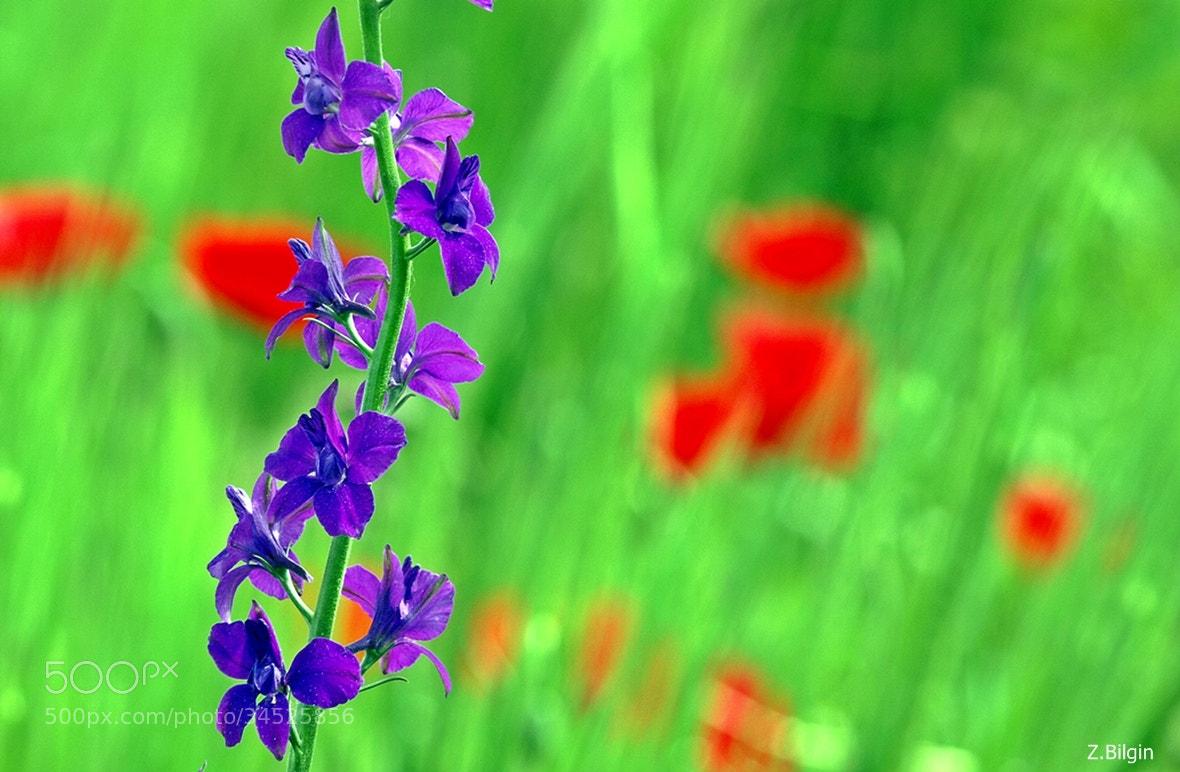Photograph rural beauties... by Zeki Bilgin on 500px