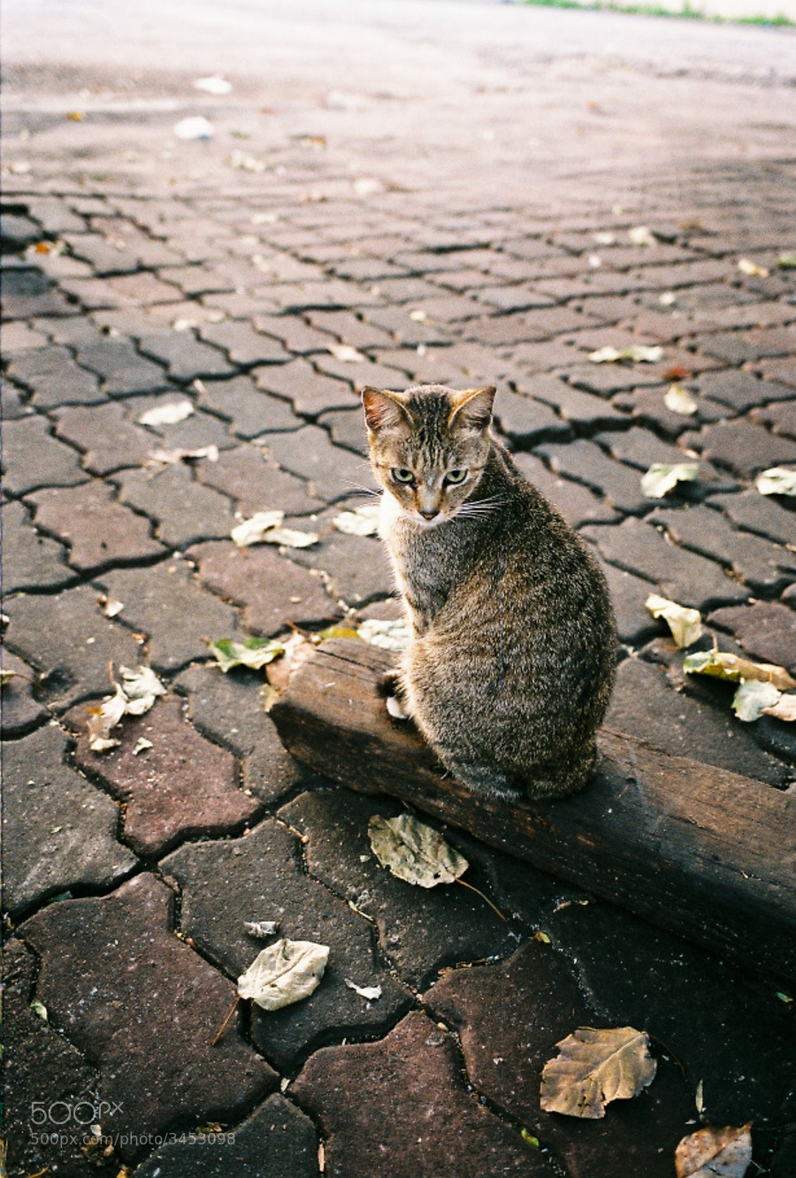 This stray cat looks very calm and alone on the street.