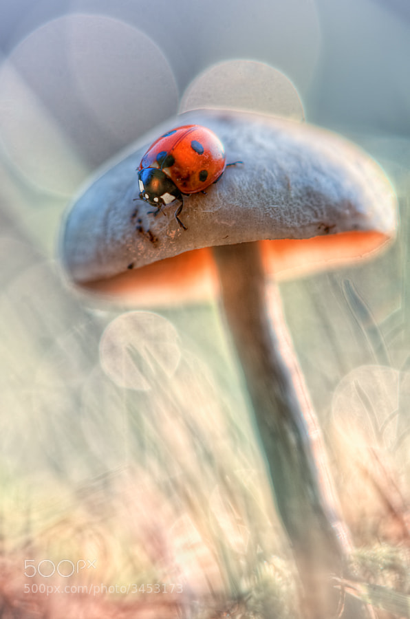 A ladybug in the smurfs country * by BLOAS Meven on 500px.com