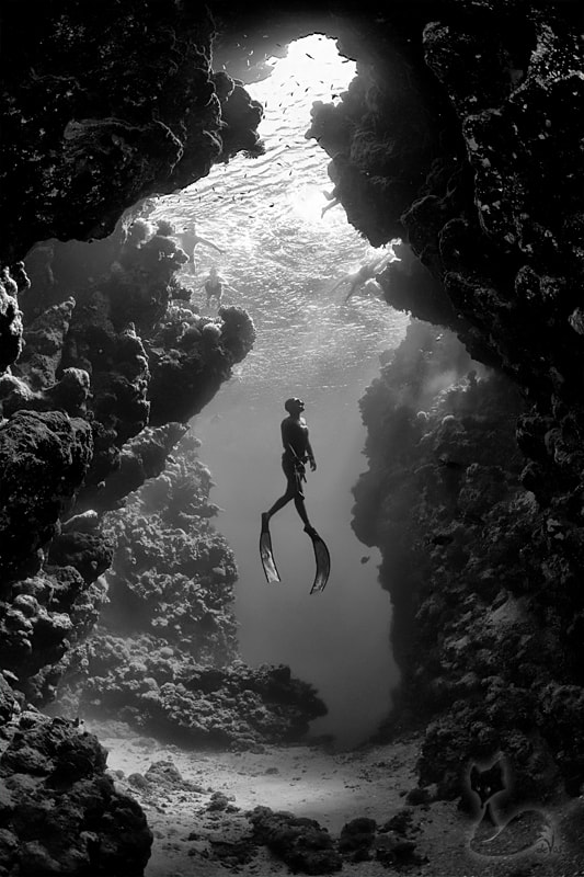 Photograph Lady Of The Deep by Jacques de Vos on 500px