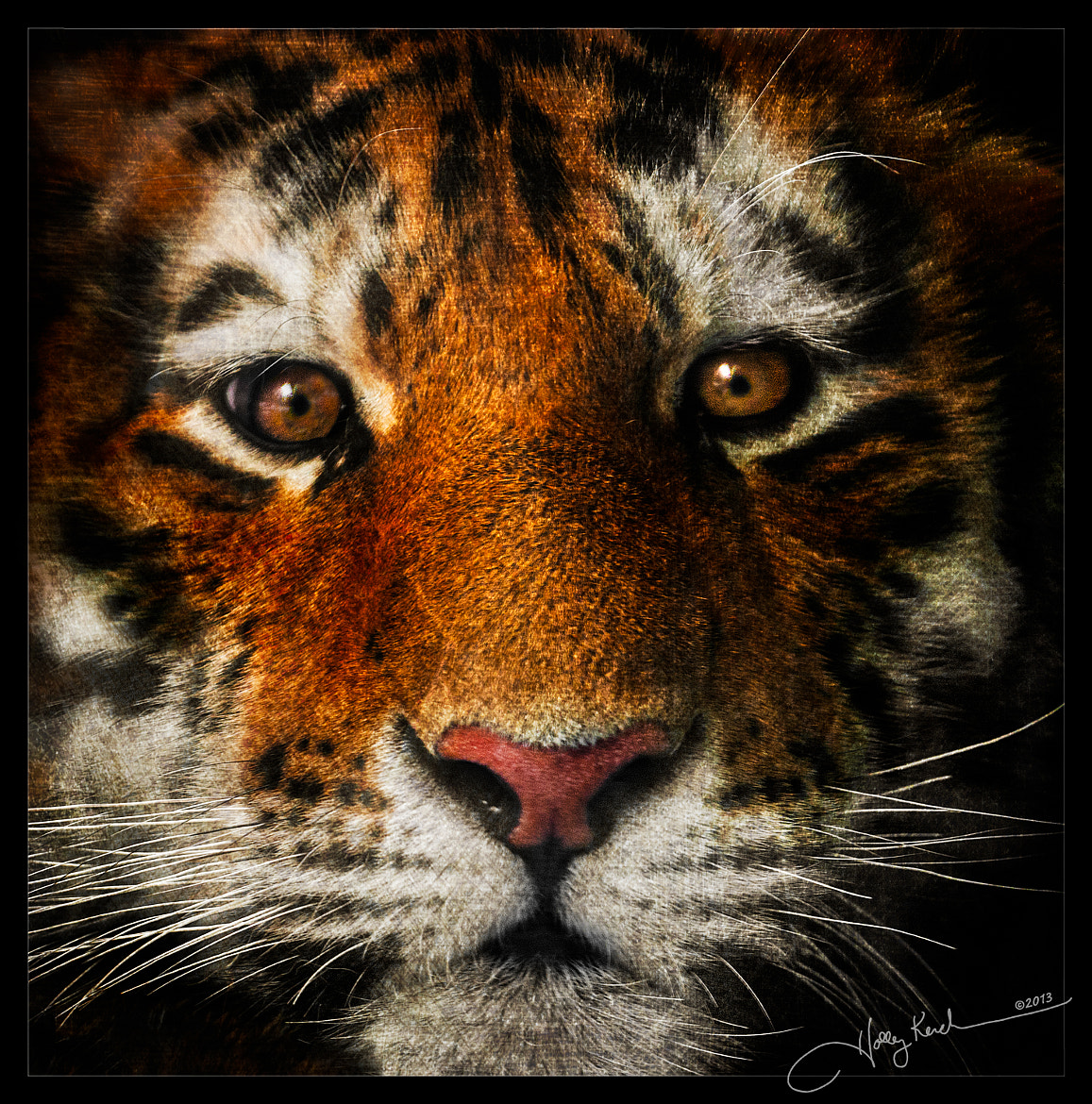 Photograph Face of the Tiger by Holly Kuchera on 500px