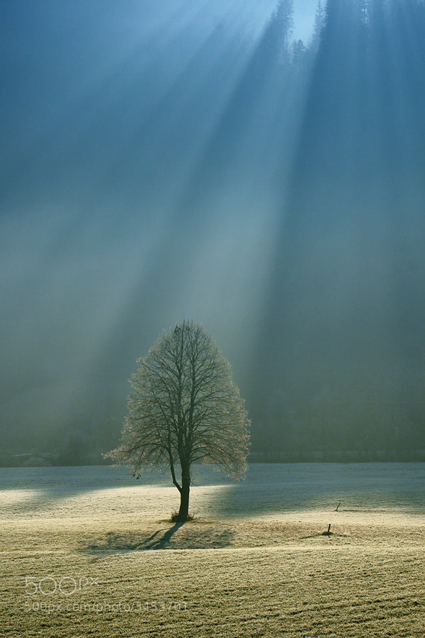 Photograph Sunlight by Janez Tolar on 500px
