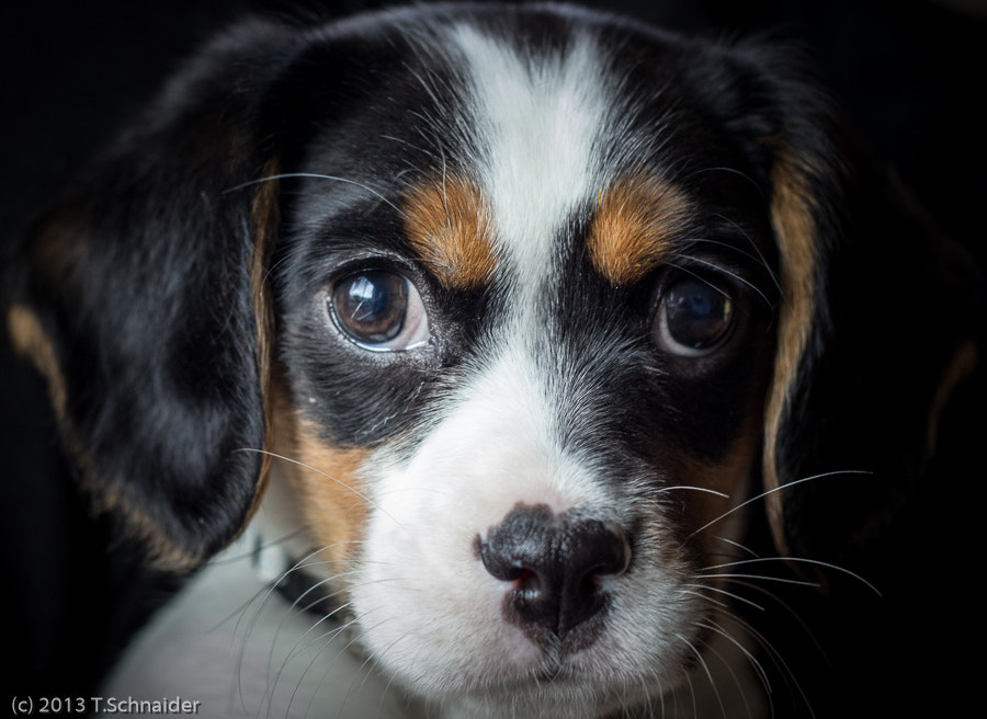 Photograph Charlie IV by tschnaider on 500px