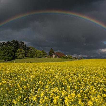 rainbow on a rapeseed field