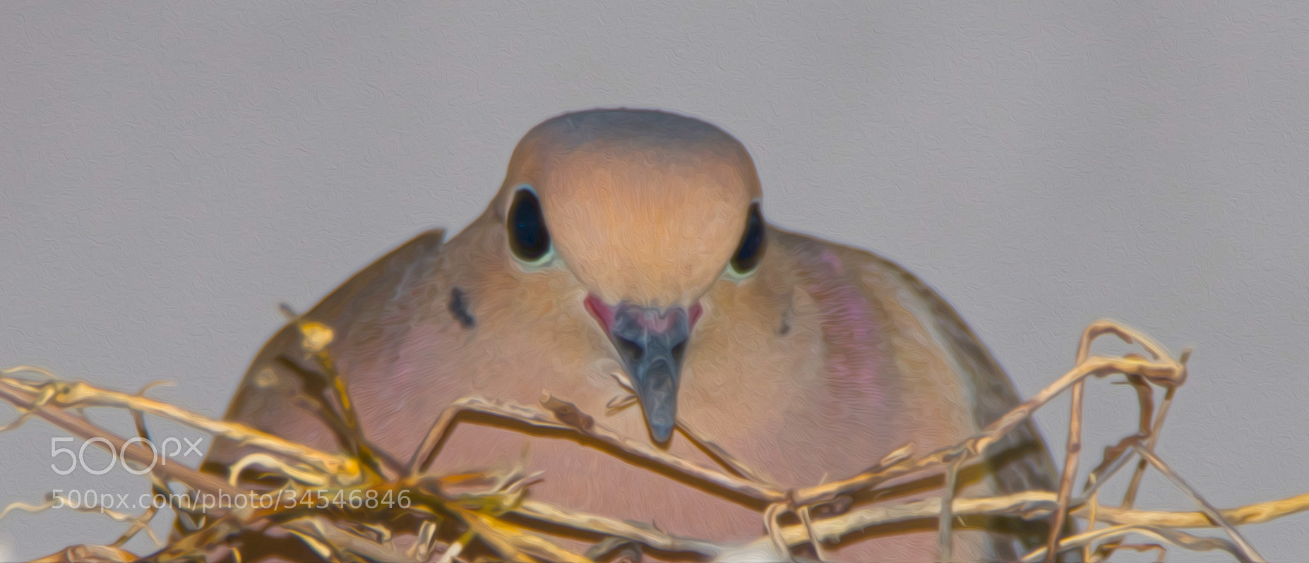 Photograph dove by Beth Pearson on 500px