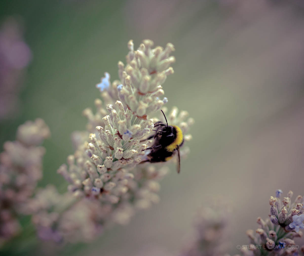 Photograph Bee by Stuart Crawford on 500px