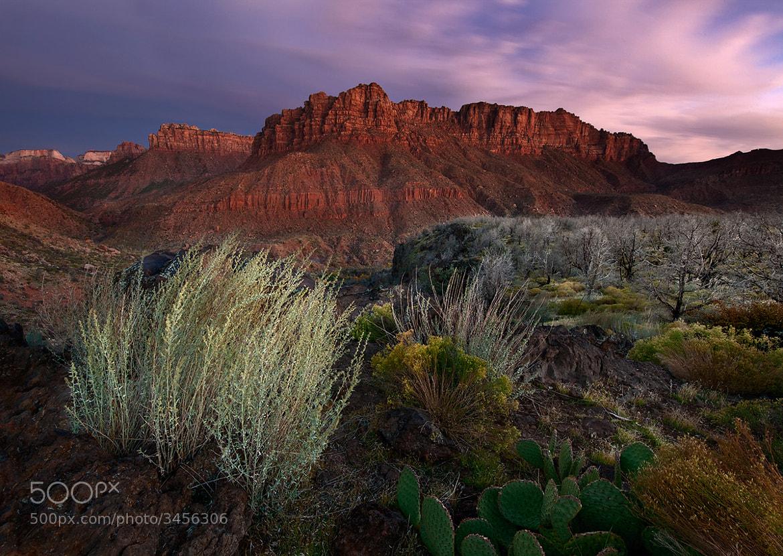 Photograph Kolob Dreams by Ian Plant on 500px