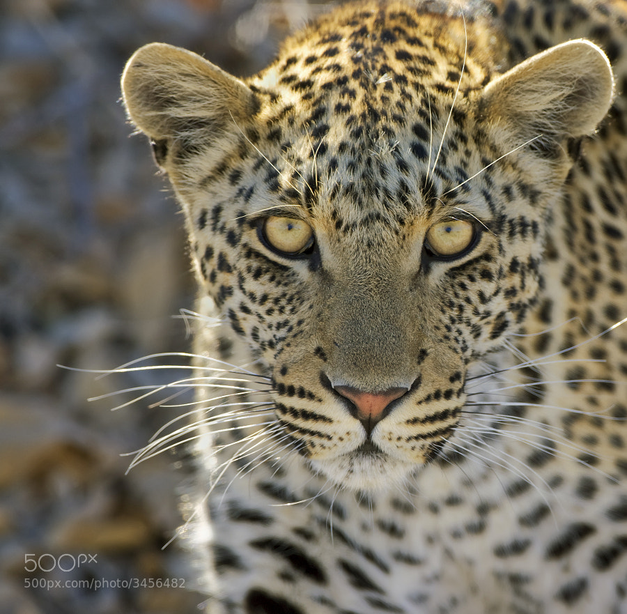 This young lady decided to take a close look at us in Kwando conncession, Botswana