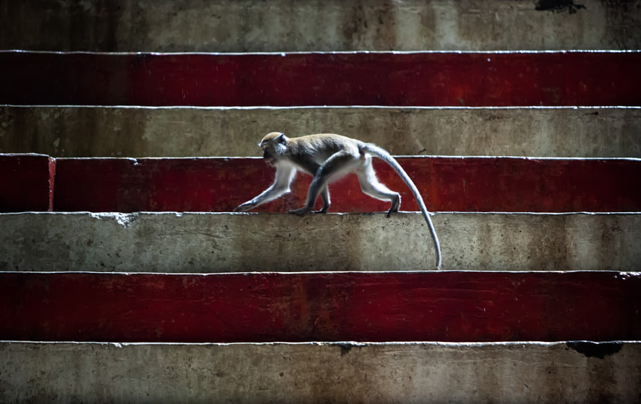 Monkey On The Steps