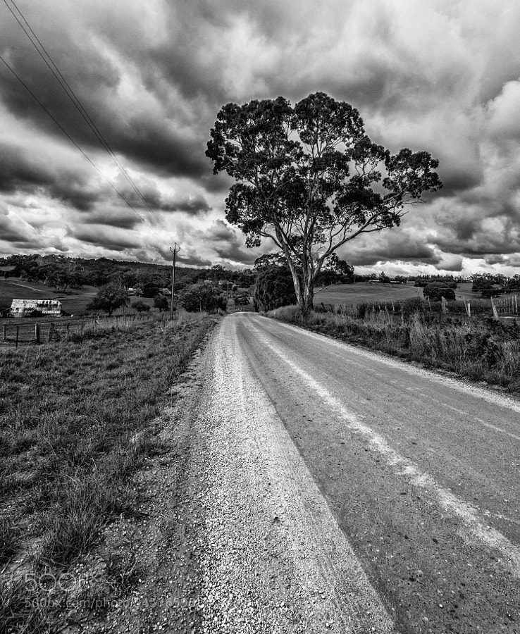 The Adelaide hills on a cloudy day. Had gone to shoot some green valleys and nice clouds with animals grazing but as usual forgot my filter set and just drove around till i reached this place with a decent cloud cover. Had always wanted to click hyperfocal shot for a disappearing road and this seemed like the perfect situation.