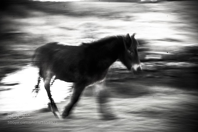 Photograph Untitled by daniela goffredo on 500px