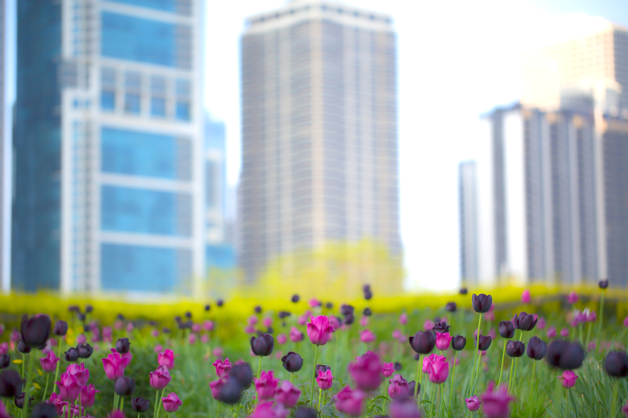 Photograph Urban Flora by Honda Rider on 500px
