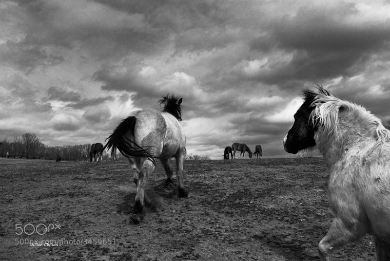 Photograph Going Home by Jillian Chilson on 500px