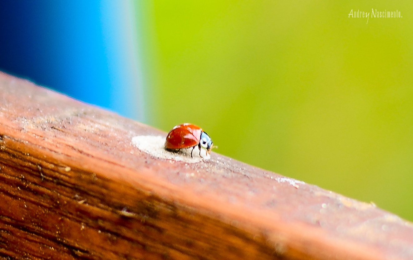 Photograph The simple colorful life (ladybug) by Andrey Nascimento on 500px