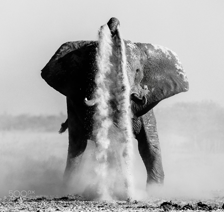 This Elephant had a lot of fun at the waterhole in Nxai Pan NP, Botswana. More Photos to come.Do you like this BW version, or would you prefer colour?