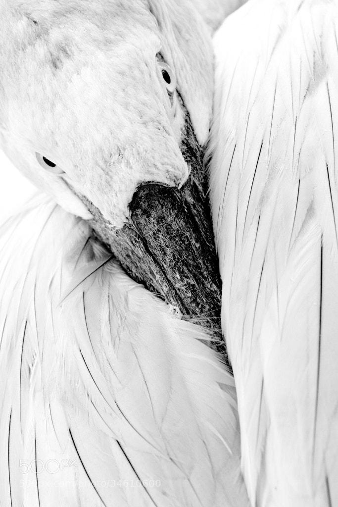 Photograph Regard d'Yvan by Steve Trefois on 500px