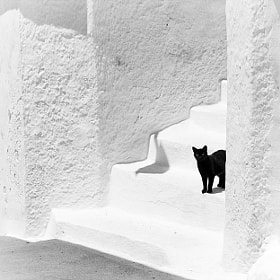 Black and white by Magali K. (penhad)) on 500px.com