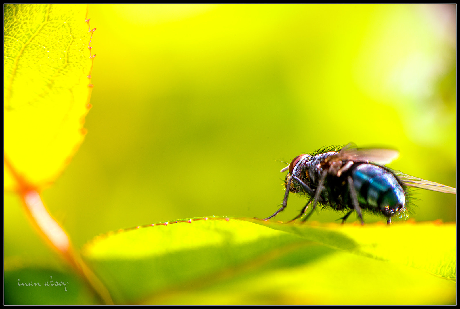 Photograph Fly by Inan Aksoy on 500px