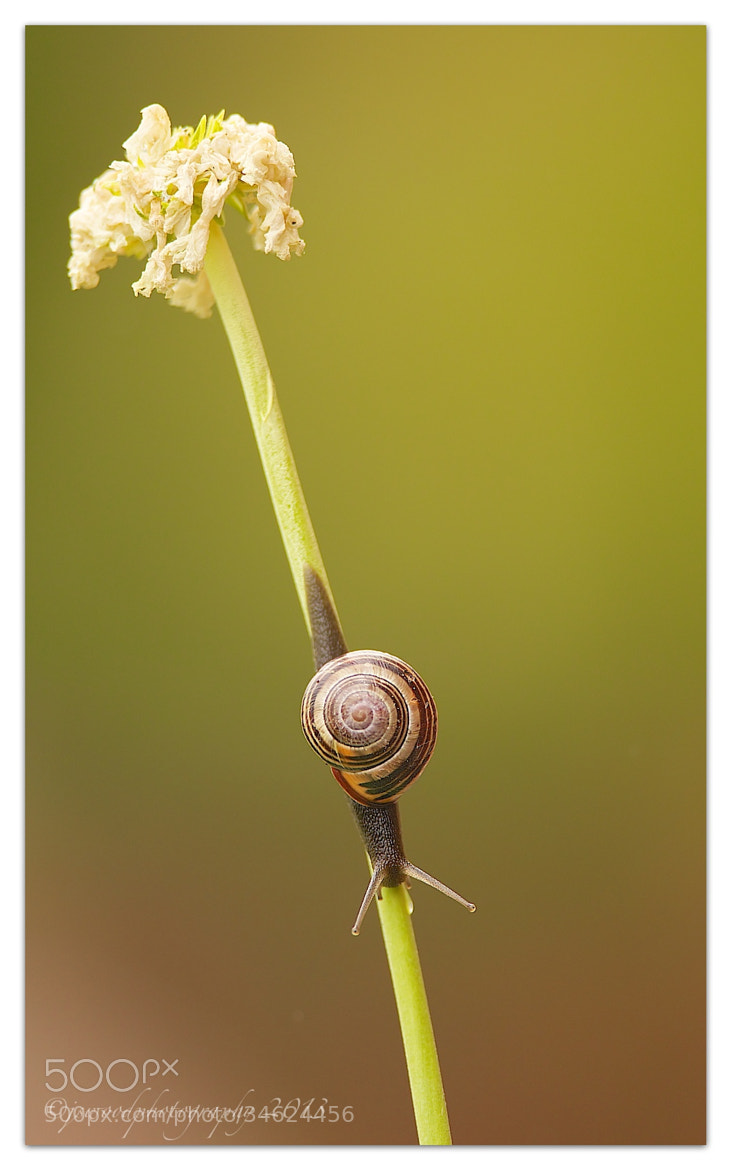 Photograph Life at a snails pace by Jason Wood on 500px