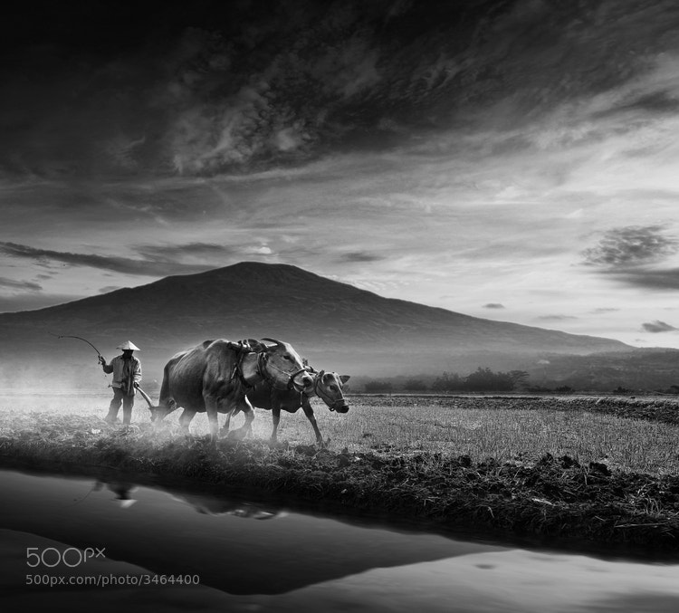 Photograph My Country by Alamsyah Rauf on 500px