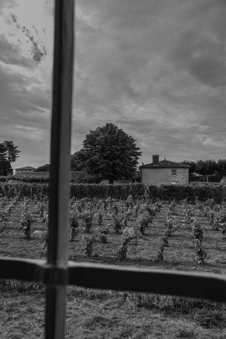 Photograph Jeune vigne - Saint-Emilion by Damien LAMBERT on 500px