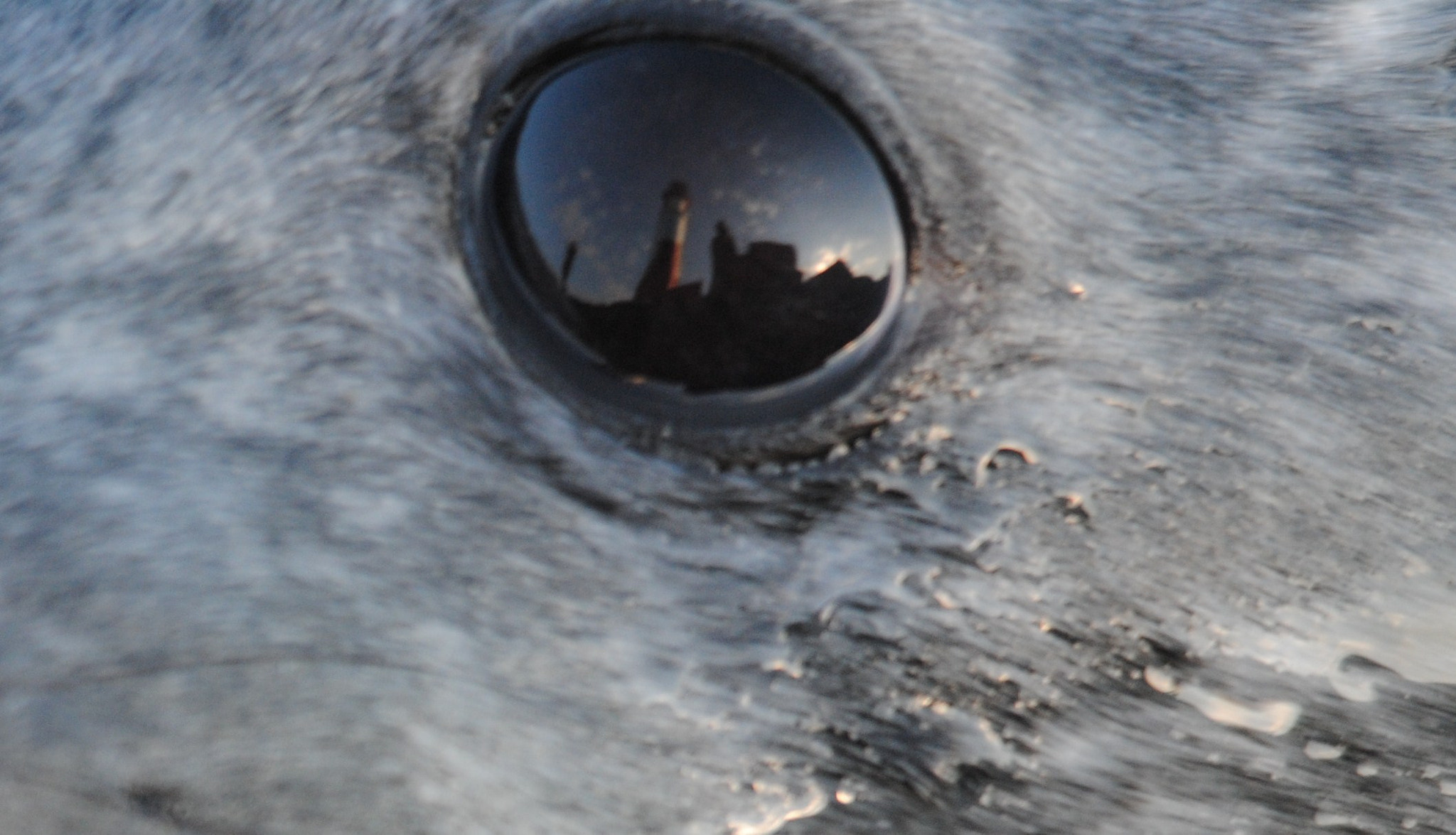 Photograph Grey Seals Eye by Andrew Douglas on 500px