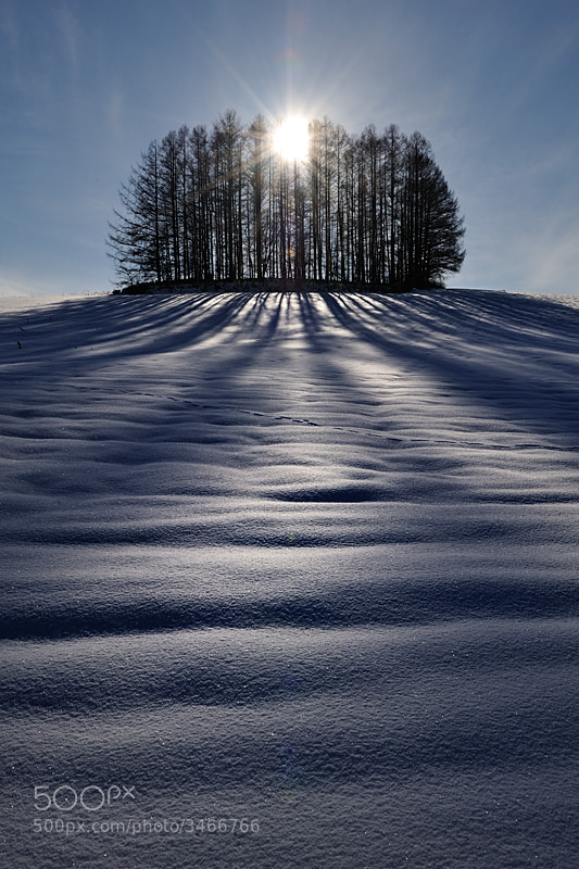 Photograph The Sun and Shadows  by Kent Shiraishi on 500px