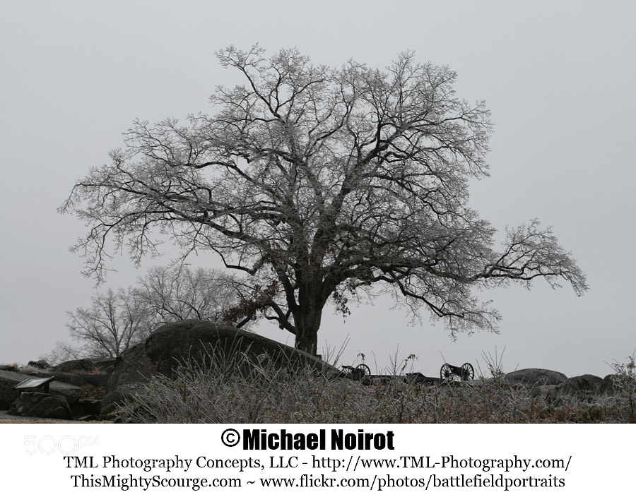 """This picture was taken after a January ice storm at Gettysburg, Pennsylvania. This is a """"witness tree"""" located on Hauk's Ridge, and as the name suggests it is old enough to have witnessed the fighting at Gettysburg.  Camera: Canon EOS 7D Lens: Canon EF 17-40mm f4L USM Zoom: 25mm Shutter: 1/50 second Aperture: f/7.1 ISO: 400"""