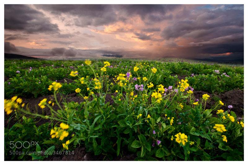 Photograph Stormy sunset by Fernando Salas on 500px