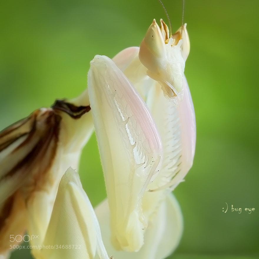 Photograph - Mantis Portrait - by bug eye :) on 500px
